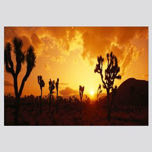 California, Joshua Tree Park, sunset